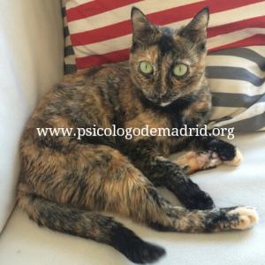 Un gato como mascota es apto solo para los niñosmas tranquilos y respetuosos. Los gatos requieren menos cuidados pero son mas ariscos e independientes. www.psicologodemadrid.org